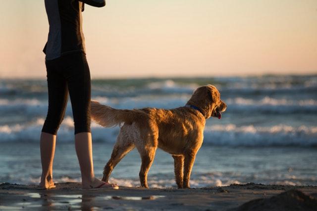 Dog on Noosa beach